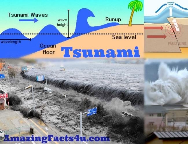 Psunami Amazing facts